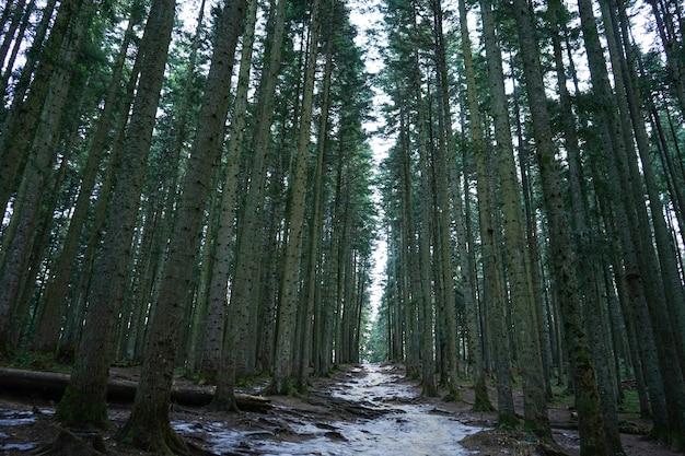 Bospad door bomen