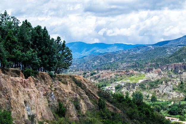 Bosque de pinos en la montaña