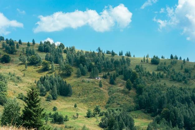Bossen van altijdgroene naaldbomen op berglandschap