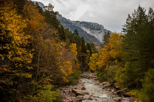 Bossen van echo valley met kleurrijke bladeren