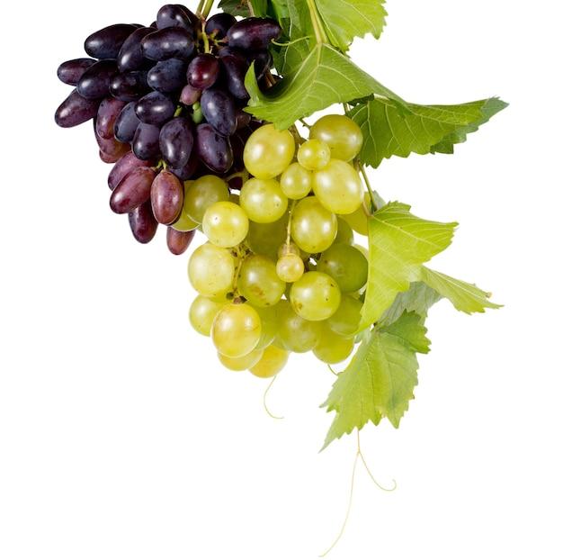 Bossen van verse, sappige rijpe rode en groene druiven