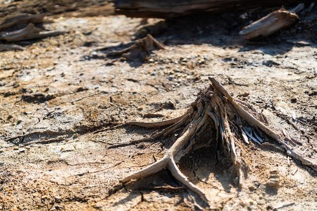 Bosverlies als gevolg van vervuiling, droogte en branden. ongebruikelijke vorm van droge boomstammen, textuur van dode boom geen schors