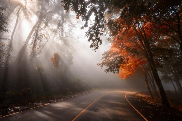 Bosweg met zonstralen in de herfst