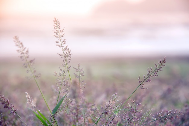 Bosweide met wilde grassen, macrobeeld met kleine diepte van gebied, onduidelijk beeldachtergrond