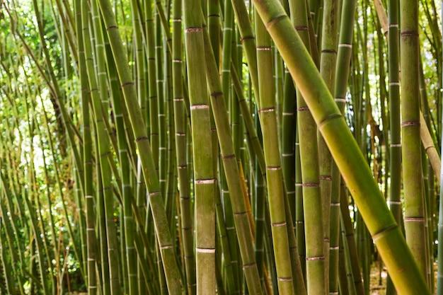 Botanisch bamboebos bij daglicht