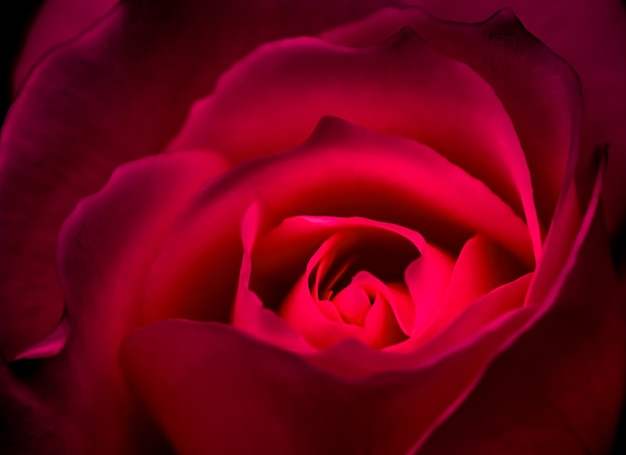 Botanisch concept uitnodigingskaart soft focus abstract floral achtergrond rood roze bloem macro