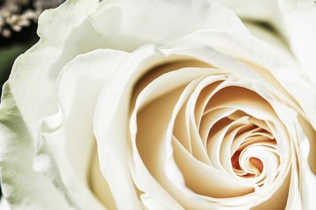 Botanisch concept uitnodigingskaart soft focus abstract floral achtergrond wit roze bloem macro