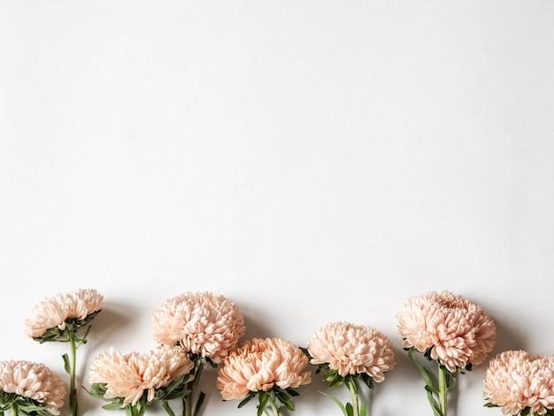 Botanische bloemengrens van de herfst seizoengebonden bloemen - perziksters op witte achtergrond. bovenaanzicht kopie ruimte