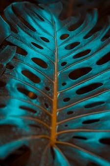 Botanische monstera bladeren