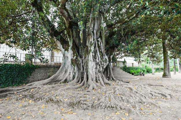 Botanische tuin, coimbra