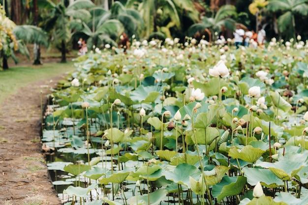 Botanische tuin in pamplemousses