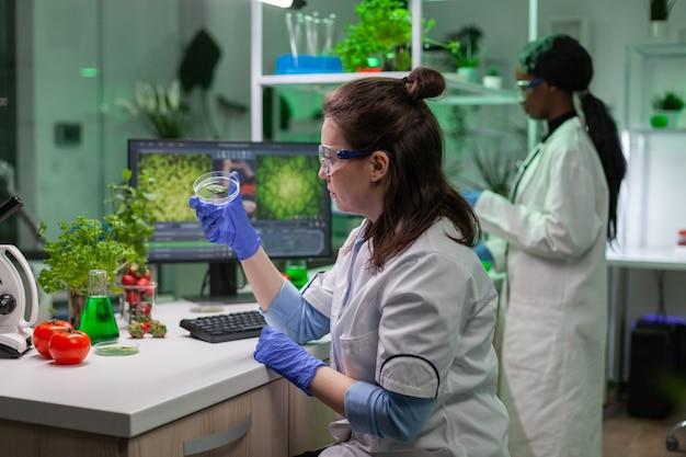 Botanische vrouw kijkt naar petrischaal met bladmonster die ggo-test typt, wetenschapper onderzoeker op computer voor scheikunde-experiment
