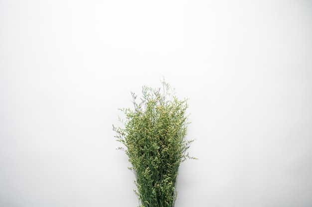 Boven geschoten van een bos van plantentakjes op een witte oppervlakte