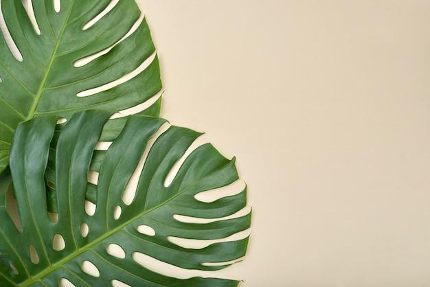 Boven weergave van groene tropische bladeren op pastelachtergrond, natuurconcept