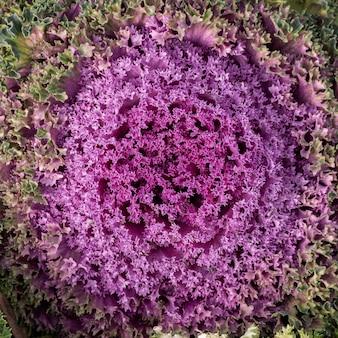 Bovenaanzicht abstracte paarse bloem