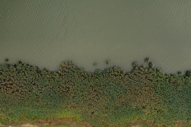 Bovenaanzicht af groen meerwater en flora.