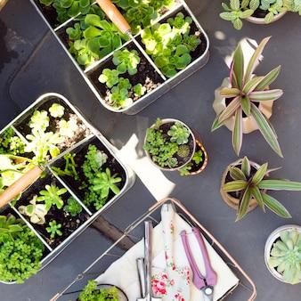 Bovenaanzicht arrangement van verschillende planten in potten