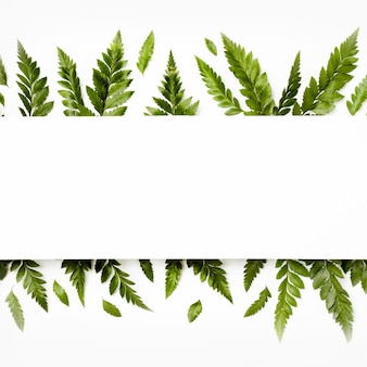 Bovenaanzicht assortiment bladeren met kopie ruimte