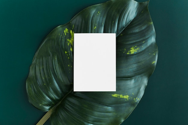 Bovenaanzicht blanco visitekaartje op blad achtergrond