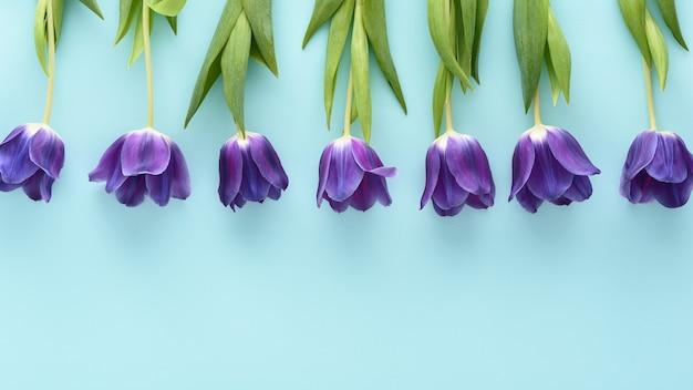 Bovenaanzicht blauwe tulpen in rij op blauwe achtergrond met kopie ruimte, bloemstuk concept