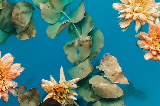 Bovenaanzicht bleke chrysanten in blauw gekleurd water
