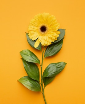 Bovenaanzicht bloeiende bloem
