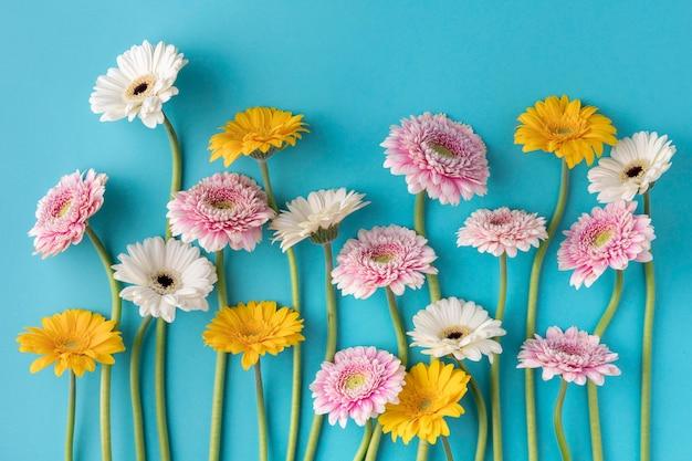 Bovenaanzicht bloeiende bloemen