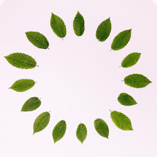 Bovenaanzicht cirkel van bladeren met kopie ruimte