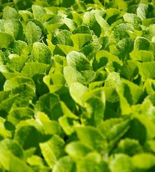 Bovenaanzicht close-up bedden van groene zaailingen achtergrond