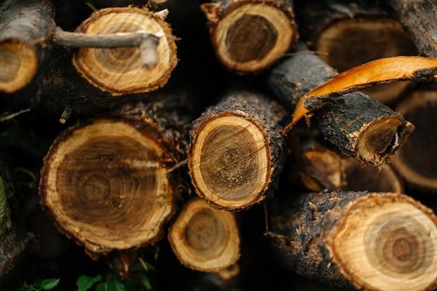 Bovenaanzicht close-up op natuurlijke boomstammen gesneden