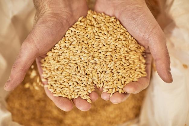 Bovenaanzicht close-up van mannelijke handen met wat of gerst gewassen in hartvormige schep over jute zak, kopieer ruimte