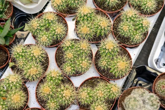 Bovenaanzicht collectie cactussen in bloempotten
