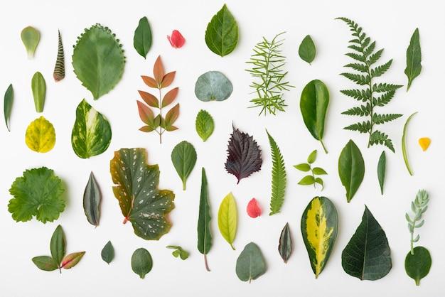 Bovenaanzicht collectie van natuur bladeren