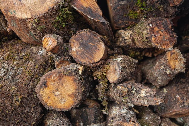 Bovenaanzicht droog hout