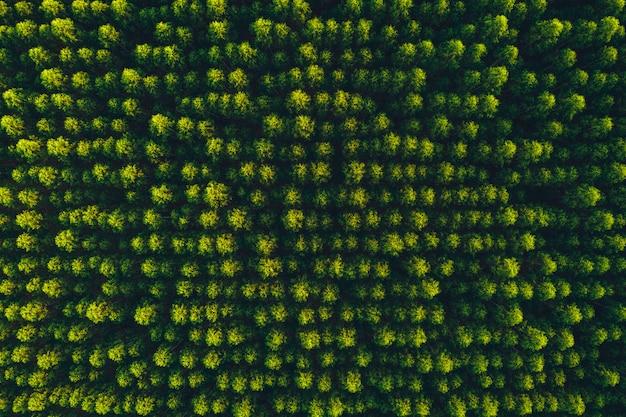 Bovenaanzicht eucalyptus boom bos