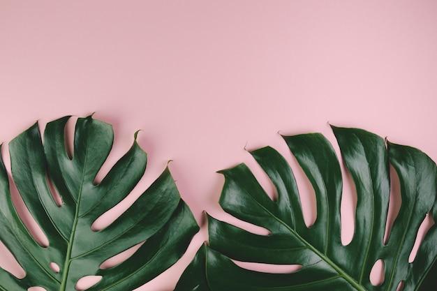 Bovenaanzicht exotische bladeren