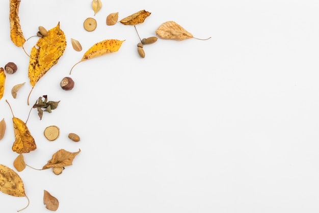 Bovenaanzicht frame met bladeren en kopie-ruimte