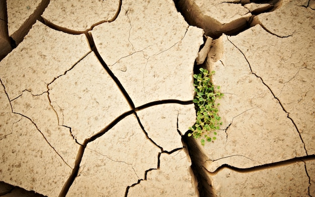 Bovenaanzicht gebarsten droge grond met groene plant