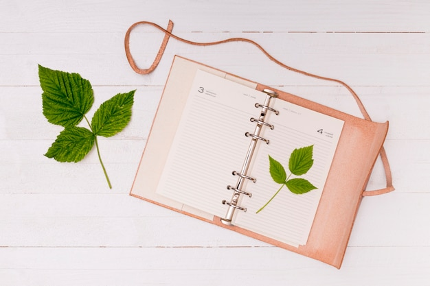 Bovenaanzicht gemeenschappelijke beukenblaadjes met notitieboekje