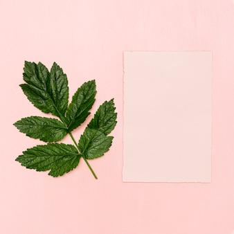 Bovenaanzicht groen blad met roze papier
