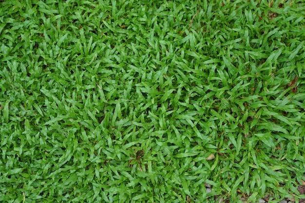 Bovenaanzicht groen gras na regenval