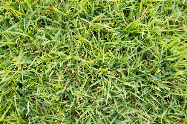 Bovenaanzicht groen gras