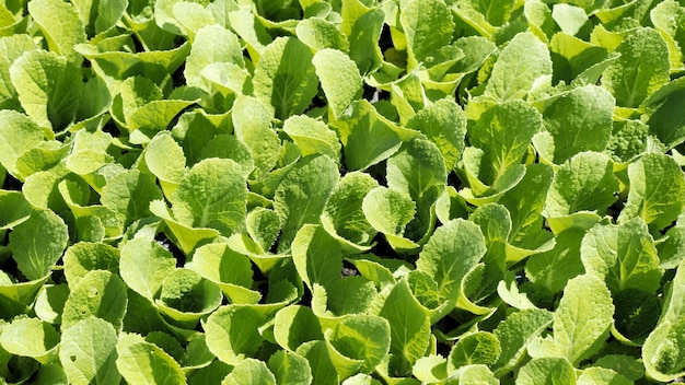 Bovenaanzicht, groene scheuten van zaailingen verschijnen uit de grond op het platteland