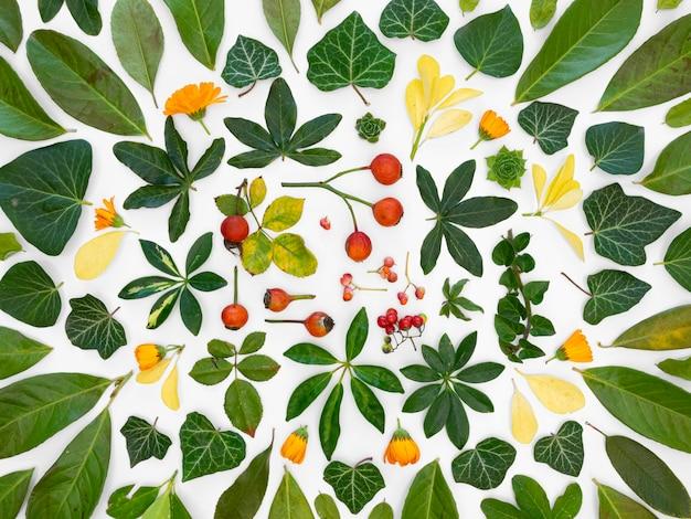 Bovenaanzicht groep groene bladeren en bloemen