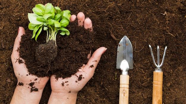 Bovenaanzicht handen met plant