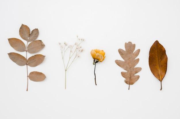 Bovenaanzicht herfst bladeren plat lag