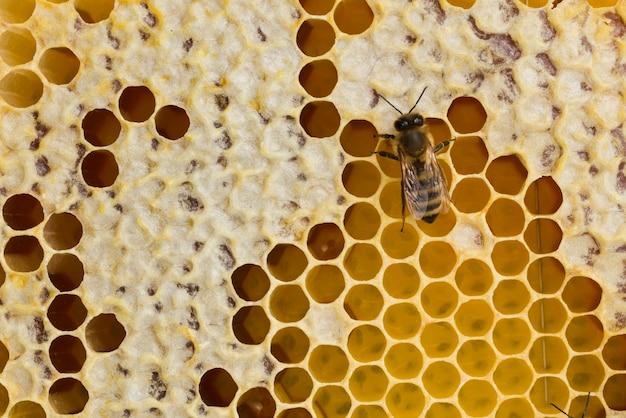 Bovenaanzicht honingraat en een honingbij