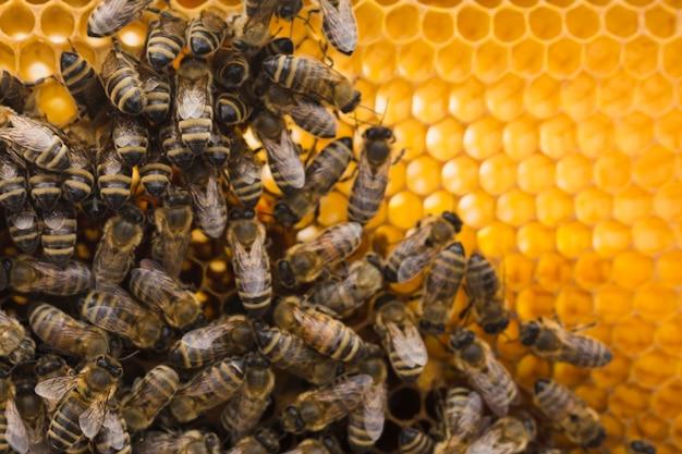 Bovenaanzicht honingraat met bijen
