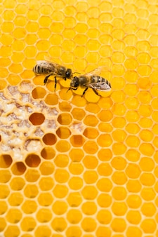 Bovenaanzicht honingraat