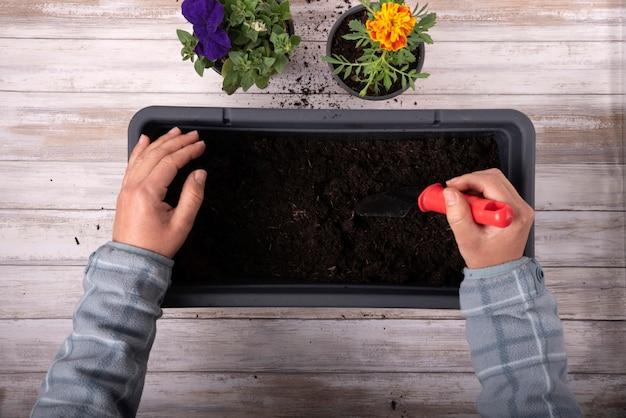 Bovenaanzicht iemands handen planten planten in een grote pot op houten achtergrond